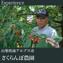 ▼さくらんぼ狩り体験(さくらんぼ農園)A