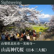 ▼日本最古・最大の桜 山高神代桜(日本三大桜)B