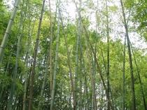 当館内の竹林