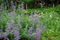 6月の花壇2