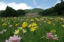岩岳ゆり園