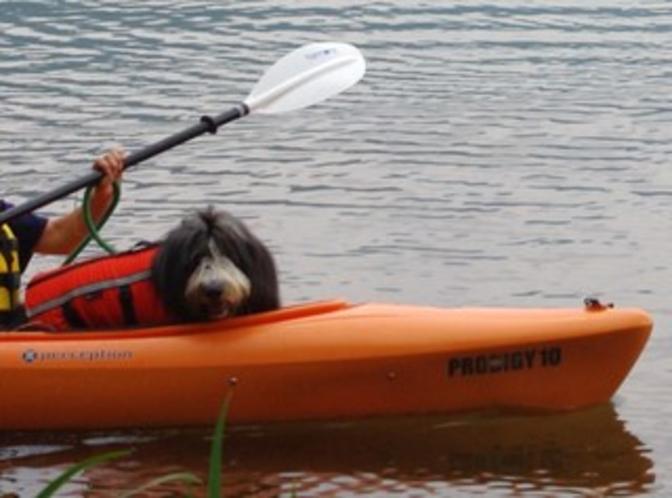 犬カヌー小谷1