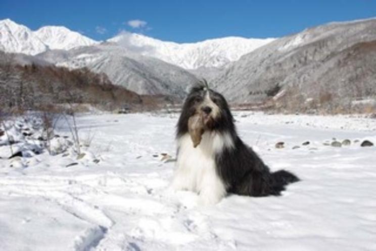 冬2011-1