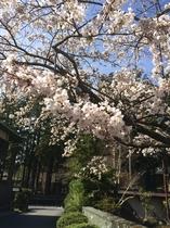 春の西禅院近辺