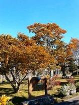 アネックスアルカスの庭の木々