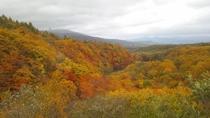 秋の八幡平