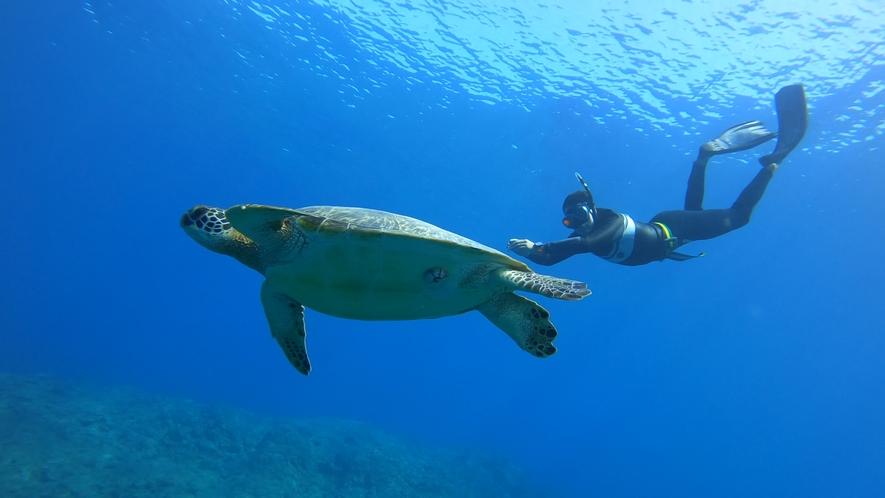 アクティビティ:サンゴと海ガメスノーケル