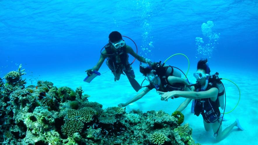 アクティビティ:体験ダイビング