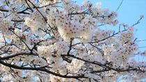 【外観】桜は例年、4月上旬が見ごろです♪※イメージ