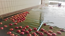 【温泉】タイミングがよければ、季節に合わせた変わり風呂プランもあるかも…♪※りんご風呂イメージ