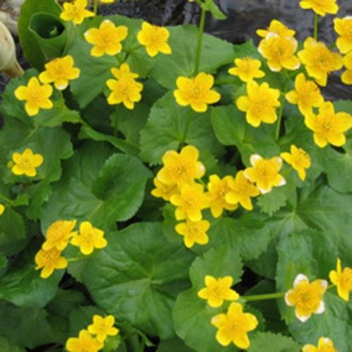 *八幡平の自然/春から秋にかけて様々な花が八幡平の山々を彩ります。