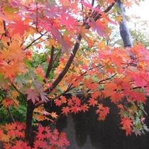 *中庭/紅葉の季節には中庭の木々も鮮やかな秋色に染まります。