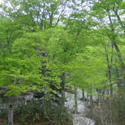 *八幡平の自然/火山帯独特の神秘的な自然の風景が広がり、数多くの温泉にも恵まれた天然のオアシスです。