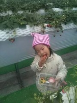 栃木県と言えばとちおとめイチゴ狩り