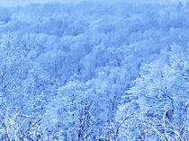 冬の談話室からの風景です☆