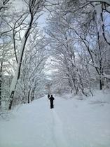 snow周辺の森をお散歩