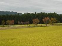 近くの田園風景。紅葉もとても綺麗。
