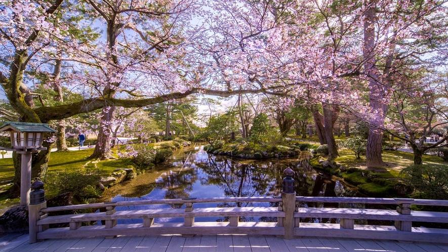 【春の兼六園】※石川県の有名観光スポット。桜のお花見スポットでも有名。※当館から車で約60分程です