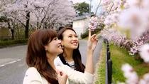 【真菰ヶ池のしだれ桜】4月上旬~中旬の春爛漫♪当館より徒歩2分