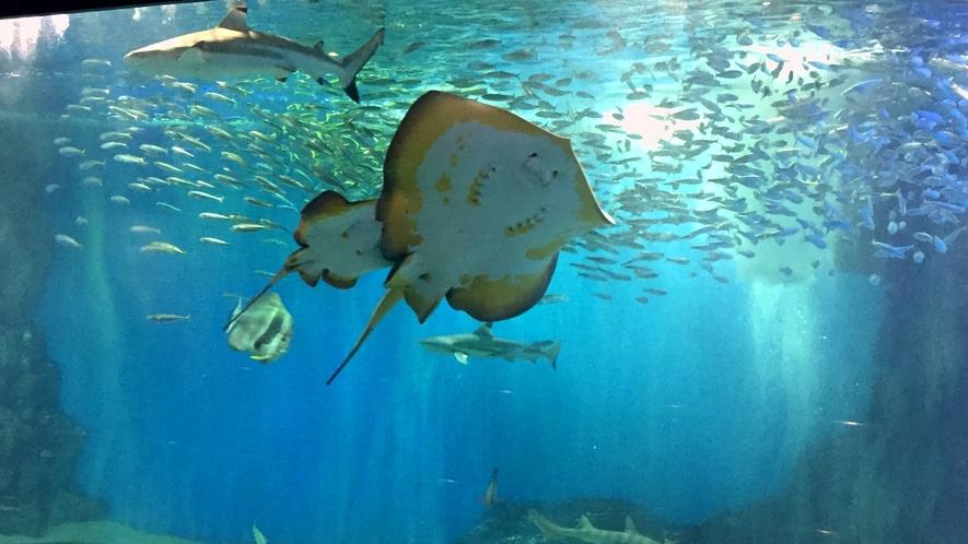 【越前松島水族館】お子様連れに最適な規模。大人でも楽しめます!※当館から車で約50分程