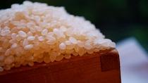 ★今では珍しいガス釜で炊いた美味しい「加賀こしひかり米」をお召し上がりください