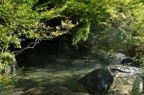 【朝の木漏れ日露天】