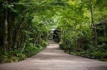 別館~深緑が深まる季節~