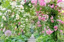ローズガーデン 庭園