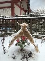 雪の中の寒牡丹 その2