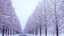 *新・日本街路樹百景『メタセコイア並木道』