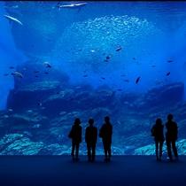 仙台で人気の観光スポット【うみの杜水族館】