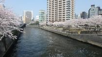目黒川桜風景