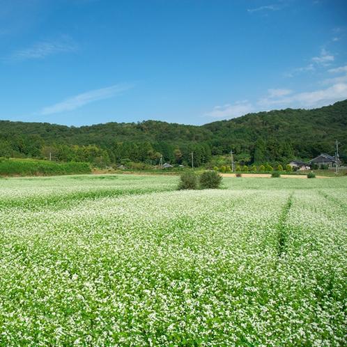 益子の風景 そば畑