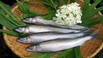 *【食材(一例)】地元でとれた新鮮なお魚。ぜひご賞味下さいませ。