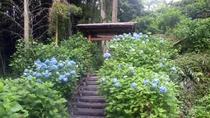 *【周辺観光/あじさいの里】6月下旬から7月中旬がみごろ。約5,000株のアジサイが咲き誇ります。