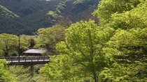 *【風景/秋】青々しい緑から黄色へ葉が色を変え始める季節の風景も綺麗です