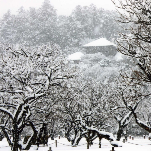 水戸市 偕楽園 雪