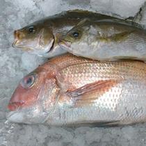 【旬の地魚】季節ごとに水揚げされる新鮮な魚介類をふんだんに使用しております