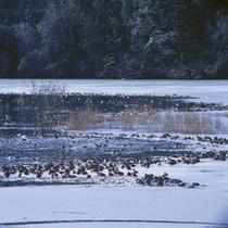 「片野鴨池」