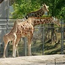 「いしかわ動物園」