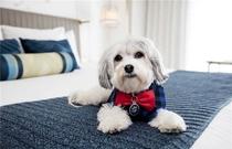 【ペット可ホテル】犬をお連れのお客様にうれしいサービス