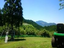 約1000坪のドッグラン、自然芝でびっくりするほどワンちゃん達走ってます!