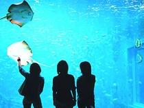 箱根園水族館」の大水槽