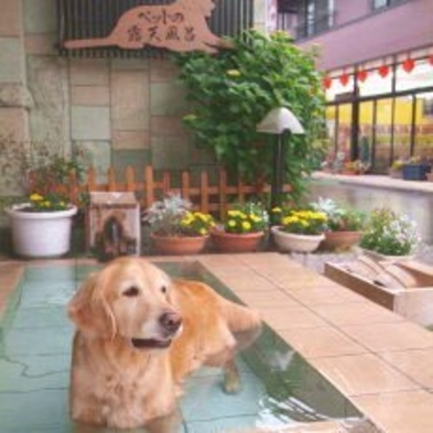 ペットと一緒 特別日 素泊まりプラン