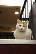 看板猫ミー