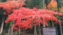 秋の御廟所