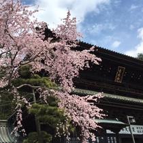 *身延山久遠寺の桜/周辺は、日本さくらの名所100選に選ばれ、全国有数の桜の名所です♪