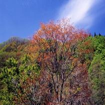 小安峡【春】