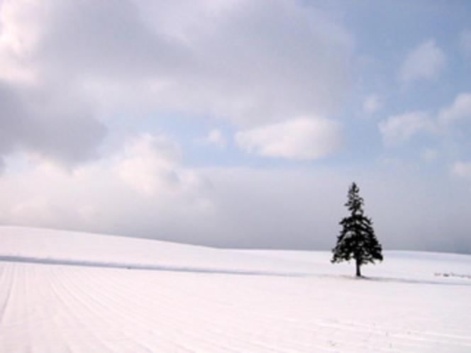 クリスマスツリー冬