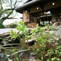 *館内の様子/玄関前にはわさびの葉が青々と育っています。自然いっぱい。